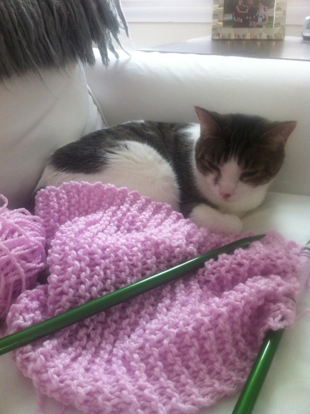 Oscar likes knitting too